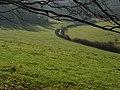 Pastoral farmland, Ibstone - geograph.org.uk - 295222.jpg
