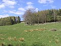 Pasture field and trees - geograph.org.uk - 399713.jpg
