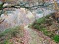 Path through Cwm Rheidol - geograph.org.uk - 280149.jpg