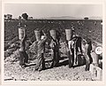 Pea Pickers Line Up on Edge of Field at Weigh Scale, near Calipatria, Imperial Valley, California, February MET DP-14185-001.jpg