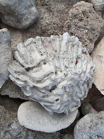 Pedras estra%C3%B1as. Praia do Hotel Bah%C3%ADa Pr%C3%ADncipe%2C Quintana Roo%2C M%C3%A9xico 4