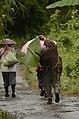 People using banana leaves as an umbrella in Nagaland JEG4750.JPG
