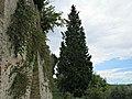 Percorso sentieristico sotto le Mura Medievali Ovest, 14.JPG