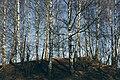 PermaLiv Majer ved Kloppvegen 19-02-23.jpg