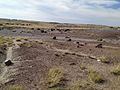 Petrified Forest (31589954865).jpg
