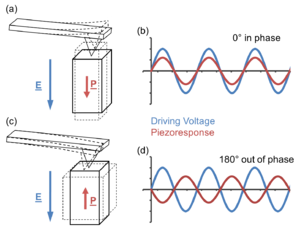 Piezoresponse force microscopy - Top line shows an in-phase piezoresponse to the driving voltage and the bottom line shows a 180° out-of-phase piezoresponse to driving voltage. Alignment of electric field and polarisation orientation (top right) results in an expansion of the domain, giving a positive deflection as measured by the photodiode. When the bias is negative the domain contracts giving a negative deflection as measured by the photodiode meaning that the piezoresponse will always be in-phase with the driving voltage. For anti-alignment of electric field and polarisation orientation (bottom right) a positive bias results in a contraction of the domain and so gives a negative deflection as measured by the photodiode therefore the piezoresponse is 180° out-of-phase with the driving voltage. In this way the orientation of polarisation within a domain can be observed.