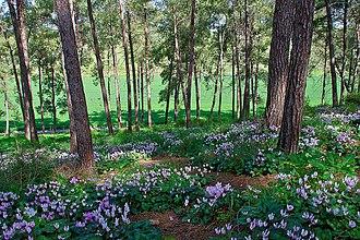 Menashe Heights - Ramot Menashe woodlands