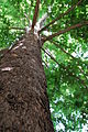 PikiWiki Israel 20376 Plants of Israel.JPG