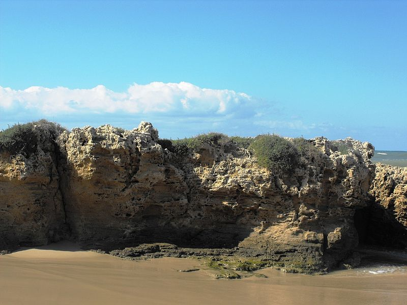 חוף פלמחים