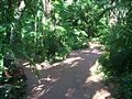 Pinecrest Gardens FL park path03.jpg