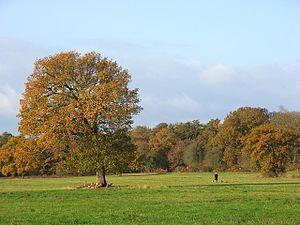 Pinkneys Green - Image: Pinkneys Green geograph.org.uk 611198