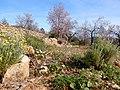 Pinos-Marnes Sella de Cau hike (26846150971).jpg