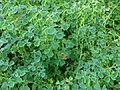 Plante aux Jardins de Bagatelle 18.JPG