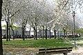 Plantsoen 't Blok Spring 2020 P1460844.jpg