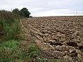 Ploughed field, Tintinhull - geograph.org.uk - 544117.jpg
