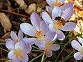 PollinationBee.jpg