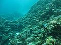 Port Ghalib march 2006-0134.jpg