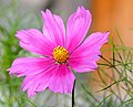 Pretty Flower (2825871499).jpg