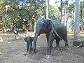 Prikaz slonova.jpg