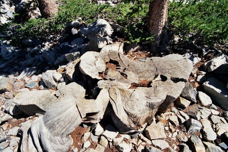 Prometheus tree1