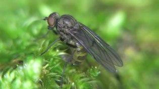 File:Ptiolina - 2015-06-13.webm