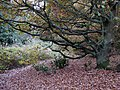 Public Footpath on Penn Common, Staffordshire - geograph.org.uk - 609778.jpg