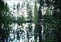 Punkaharju-16-Wald-Spiegelung-1975-gje.jpg