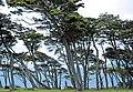 Punta Santa Ana 1.jpg