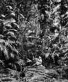 Queensland State Archives 890 Original Tropical Jungle Fairyland Kuranda via Cairns North Queensland March 1931.png
