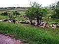 R30, Căușeni, Moldova - panoramio (7).jpg