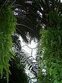 Rainforest Biome @ Eden Project (9757315761).jpg