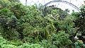 Rainforest Biome @ Eden Project (9757495403).jpg