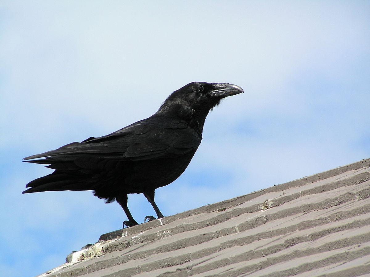 Πόσο μεγάλο είναι το πουλί του