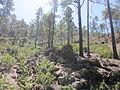 Restos aborígenes montaña de Tauro..JPG