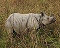 Rhino 690V6188 - Flickr - Lip Kee.jpg