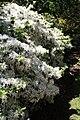 Rhododendronpark Bremen 20090513 268.JPG