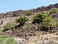 Ribeira Grande de Santiago-Cultures en terrasses-Manioc (1).jpg