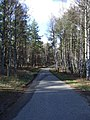 Road through the forest - geograph.org.uk - 357335.jpg