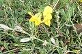 Roadside vegetation (31704009413).jpg