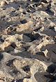 Rocks on beach Boca Raton FL.jpg