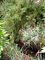 Rodef Shalom Biblical Botanical Garden - IMG 1322.JPG