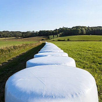 Row of white silage bales in Brastad - 2.jpg