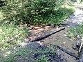 Rzeka Sztoła - panoramio.jpg