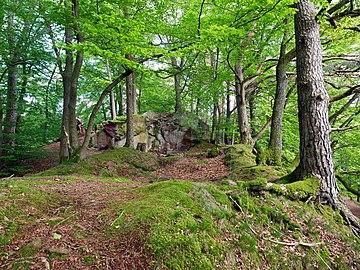 Saar-Steilhänge Lutwinuswald-05.jpg