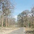 Safari Karnataka.jpg