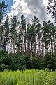 Sakaliny local biological reserve p10.jpg