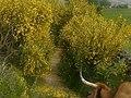 San Cristovo de Cea, Province of Ourense, Spain - panoramio (7).jpg