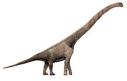 Resultado de imagen para sauroposeidon