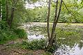 Schieder-Schwalenberg - 2015-05-29 - LIP-010 Teich bei Woebbel (03).jpg