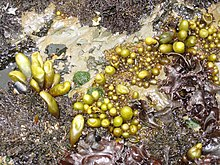 Pools Frenchmans Reef St John Virgin Island
